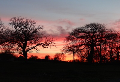 Sunset through the oaks at La Rouigerie Farm